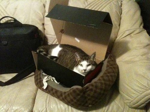 kot między posłaniami