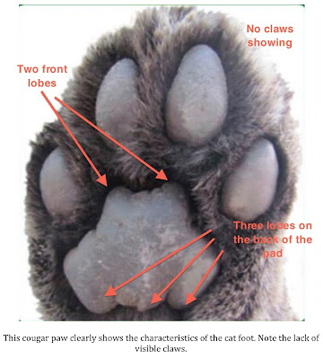 What Type Of Cat Has Black Pads Of Their Paws