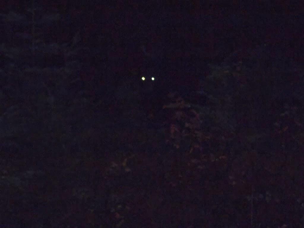 Bear eyes at night - photo#3