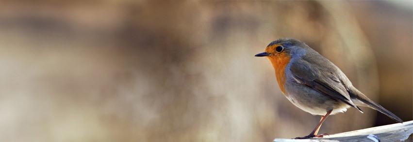 Robin Sparrow