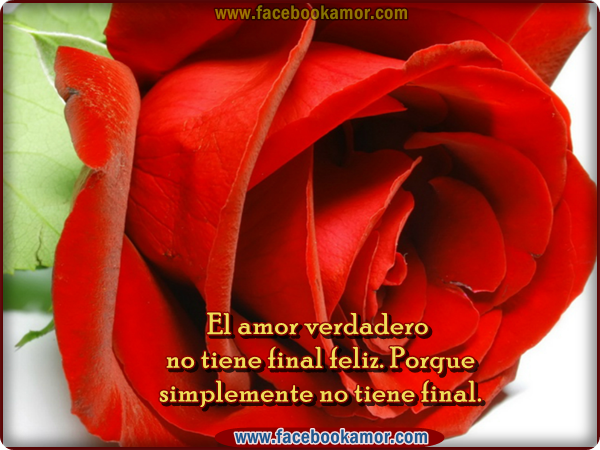 imagenes de rosa rojas con frase de amor   imagenes de amor facebook