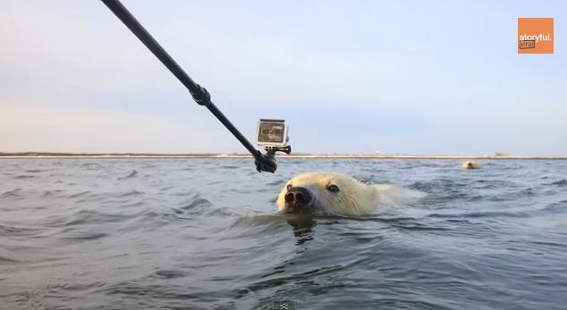 Curious Polar Bear Cubs Get Unusually Close to Photographers (VIDEO)