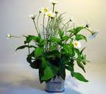 Reciclare la latta per fiori e piante