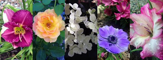 day lily, rose, hydrangea, anemone poppy, poppy flower, gladiolus, flowers, floral, gardening, plants, planting, photography, yellow rose