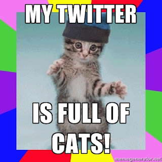 My Twitter stream is full of cat videos!