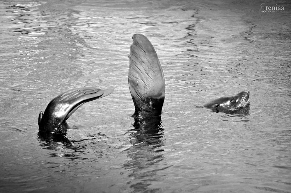 WrocLovePhoto blog, rreniaaphotography