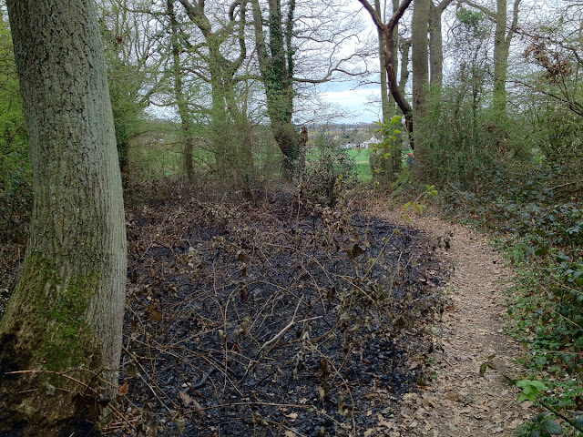 A burnt patch at the west edge of the wood.  Orpington Field Club outing to Crofton Heath and nearby woods on 7 April 2012.