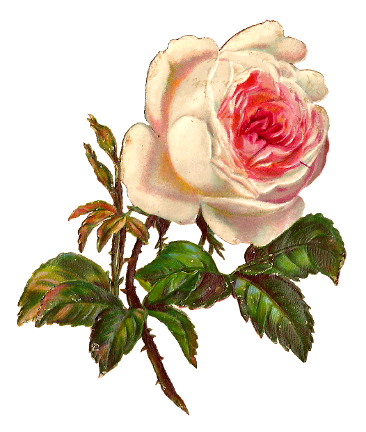 digital rose clip art