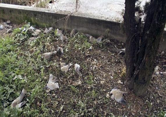 Tempat Favorit burung Bunuh Diri