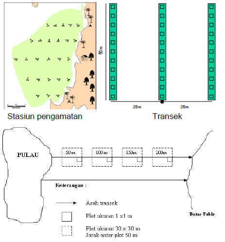Teknik Pembuatan Transek dan penentuan titik pengambilan data Inventaris lamun