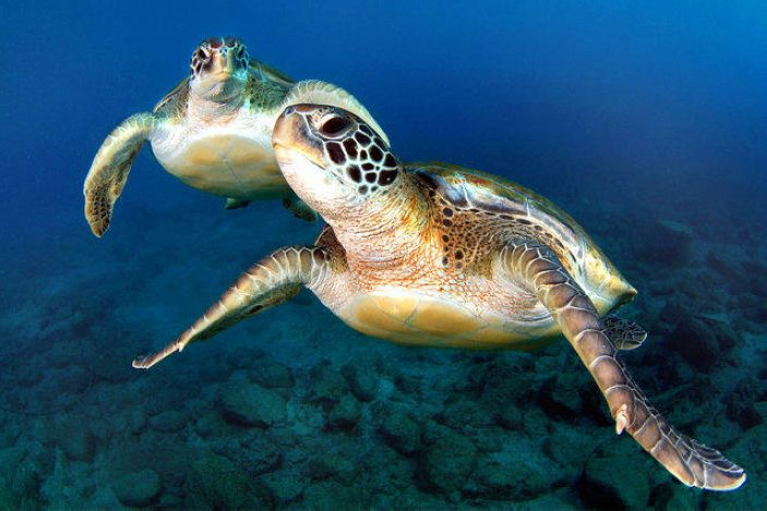 2. Turtles swim in unison