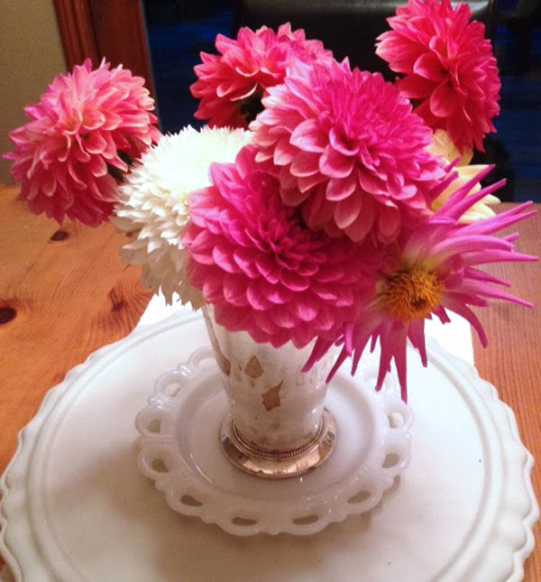 pink and white dahlias