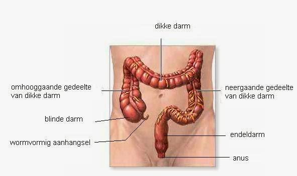 gezonde darmen voeding