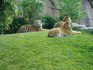 ملف كامل عن اجمل واروع الصور للحيوانات  المفترسة   حيوانات الغابة  116731390_63093f961b