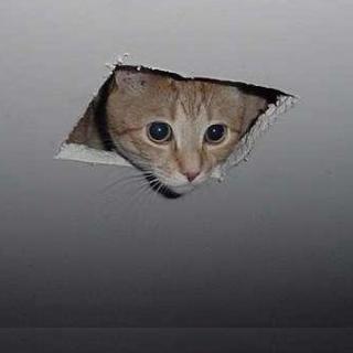 surveillance joshua wieder ceiling cat
