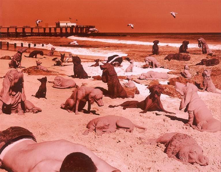 Sandy Skoglund cães na praia