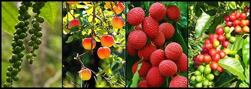 vườn sinh thái cho cây ăn quả
