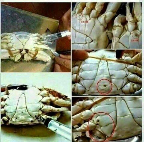 Chinese inject the crabs with formulin to keep them fresh but it is a highly toxic substance, toxic chemical in crap food, nandil visam kalandha marundhu, nanju unavugal, vilippunarvu thagaval