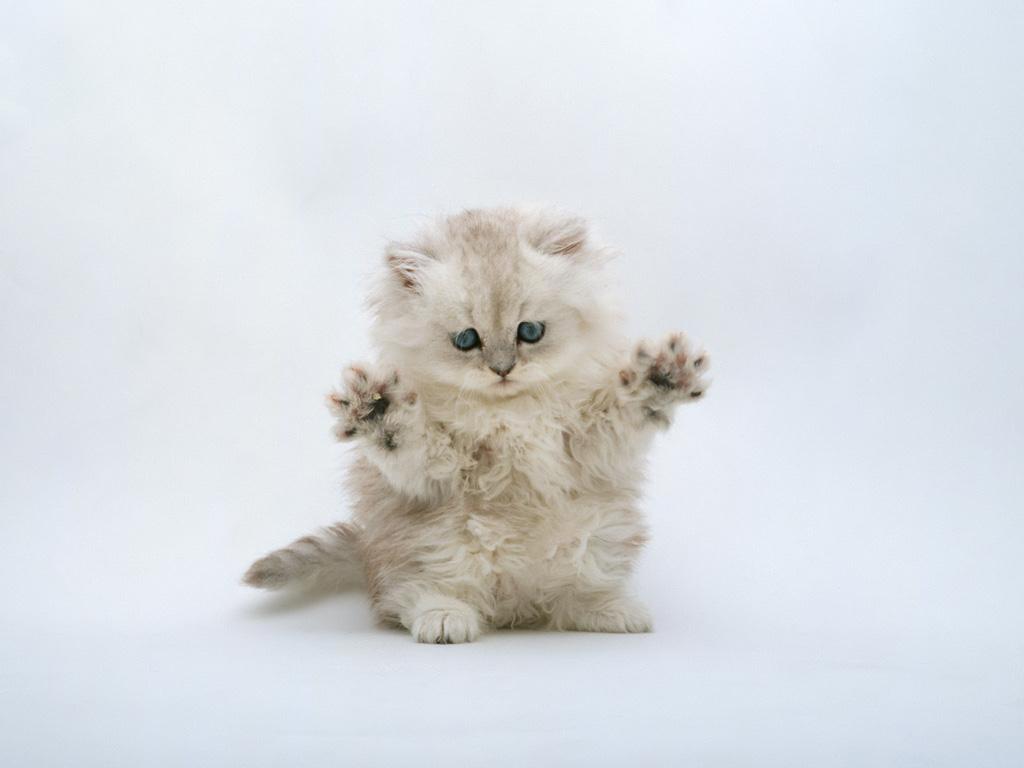 http://1.bp.blogspot.com/-q69KPi15ZCg/T5Kdi1NBwXI/AAAAAAAAAUA/5MvZrM45zT8/s1600/Kitten-Wallpaper-2.jpg