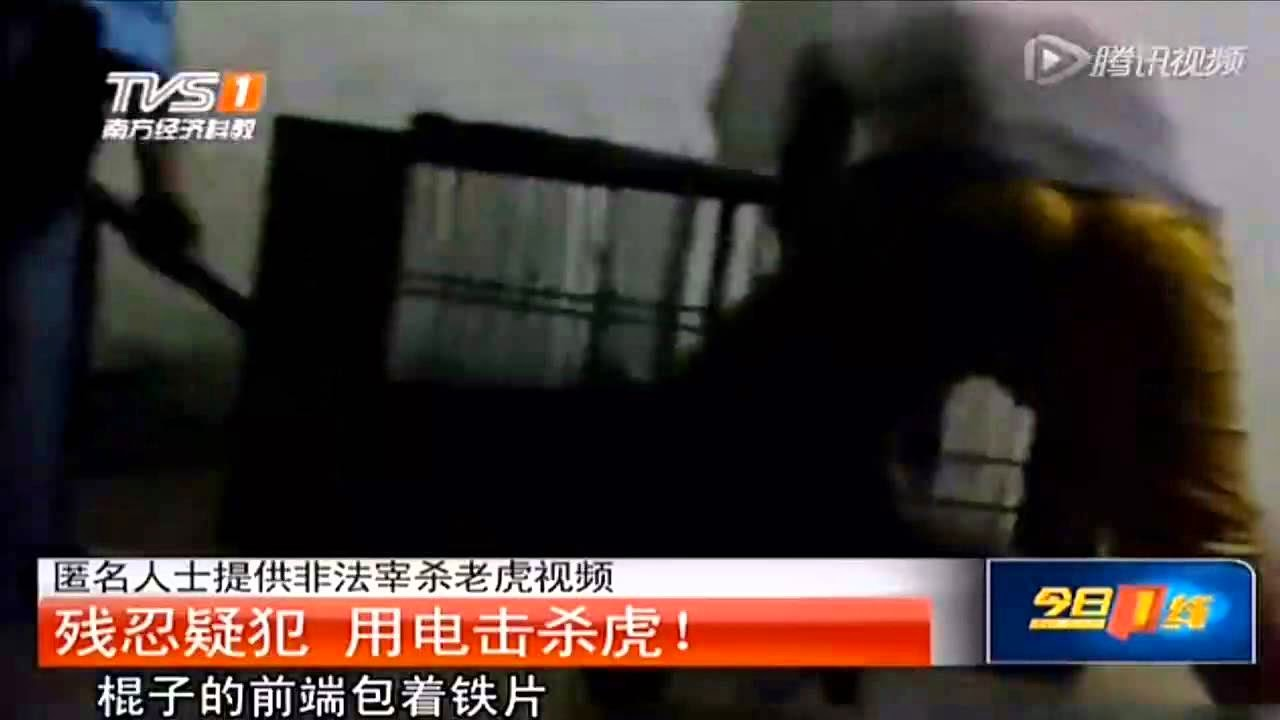 Tiger electrocuted in China