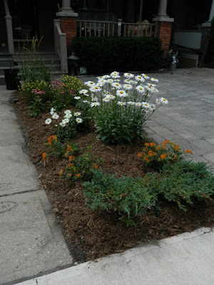 Leslieville new front garden after Paul Jung Toronto Gardening Services