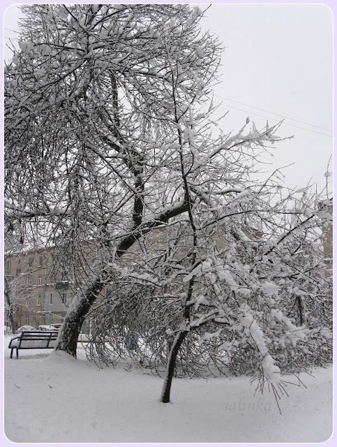зимние деревья