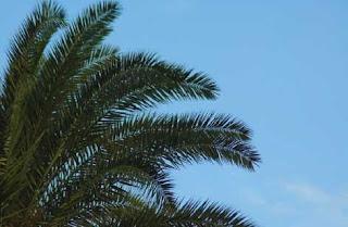 strategi untuk membuat layer mask, belajar photoshop, photoshop pemula, layer mask, kelapa, langit biru