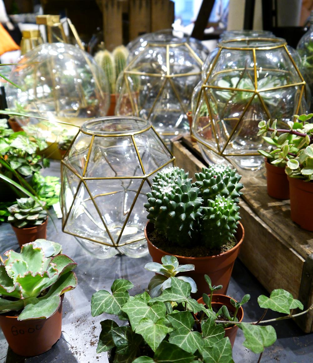 West Elm London, succulents, grow at home, geometric plant pot, indoors, urban gardener