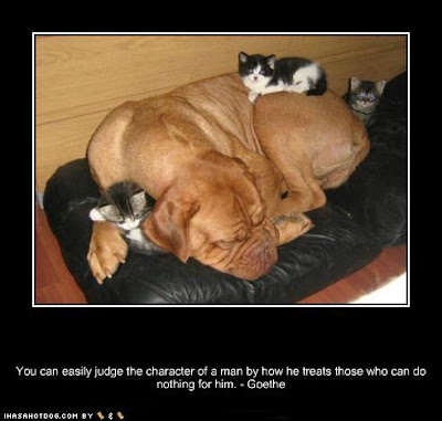 brown dog sleeping with two kittens and saying, You can easily judge the character of a man by how he treats those who can do nothing for him