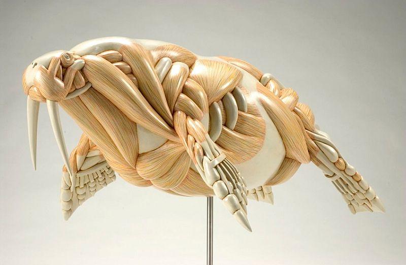 EL ANIMAL INVISIBLE: Alegoría escultórica de anatomía comparada ...