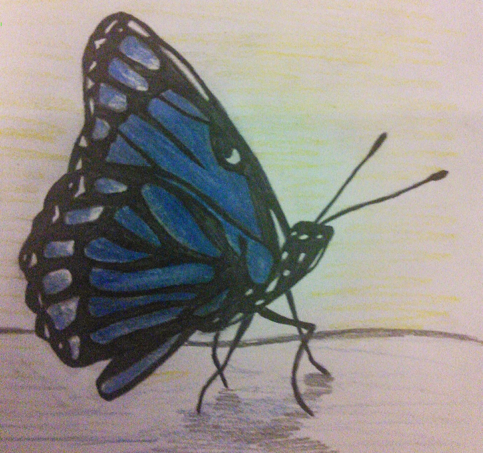 savvy art drawing blue monarch butterfly