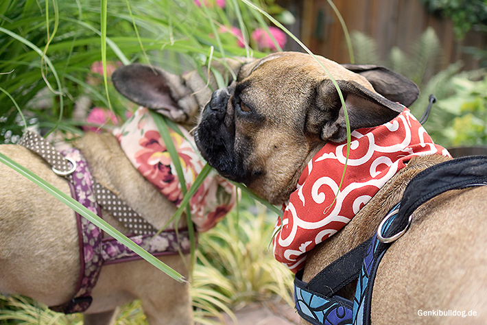 B DESIGN Cool Neck Kühlhalstücher für Hunde