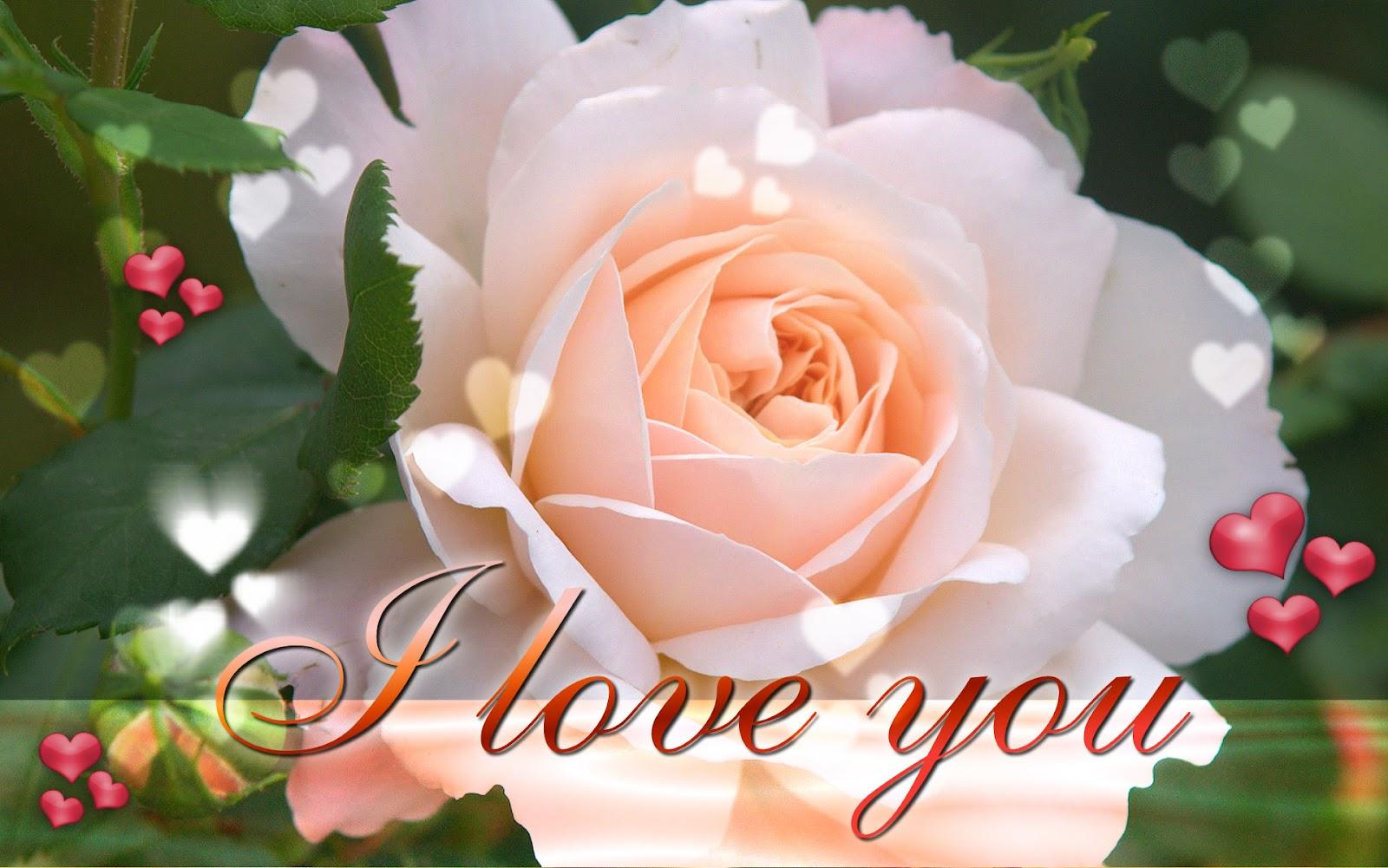 http://1.bp.blogspot.com/-q7RQR6mKYUA/T8pIFWHbKII/AAAAAAAAA4Y/xkJwiY_Jnxs/s1600/love+wallpapers+(1).jpg