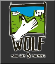 WEB - PROYECTO WOLF