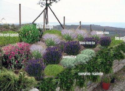 progetto giardino privato piccolo gratis online