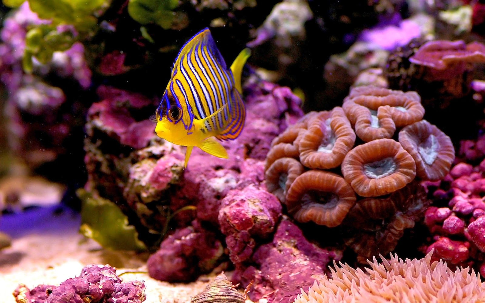 undersea-fish-pictures-with-colorful-coral-reef.jpg