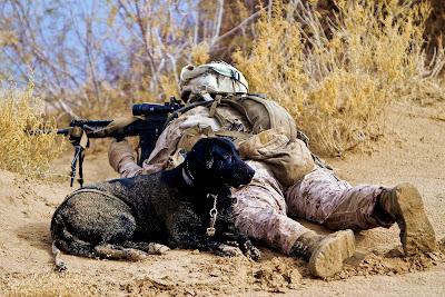 perang ke negaranya, banyak anjing memenuhi setiap jengkal tanah Iraq ...
