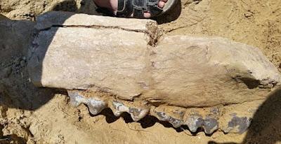 Ρουμανία: Ανακάλυψη γιγαντιαίου απολιθώματος δεινοθηρίου ηλικίας 7 εκατομμυρίων ετών