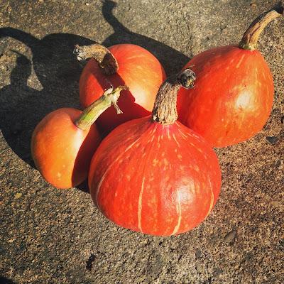 potirons pumpkins