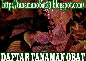 http://tanamanobat23.blogspot.com/2015/03/tanaman-obat-iler-coleus.html