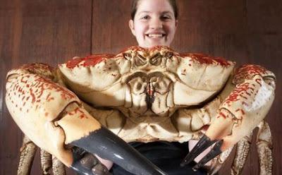 Kepiting Raksasa Dari Tasmania [ www.BlogApaAja.com ]
