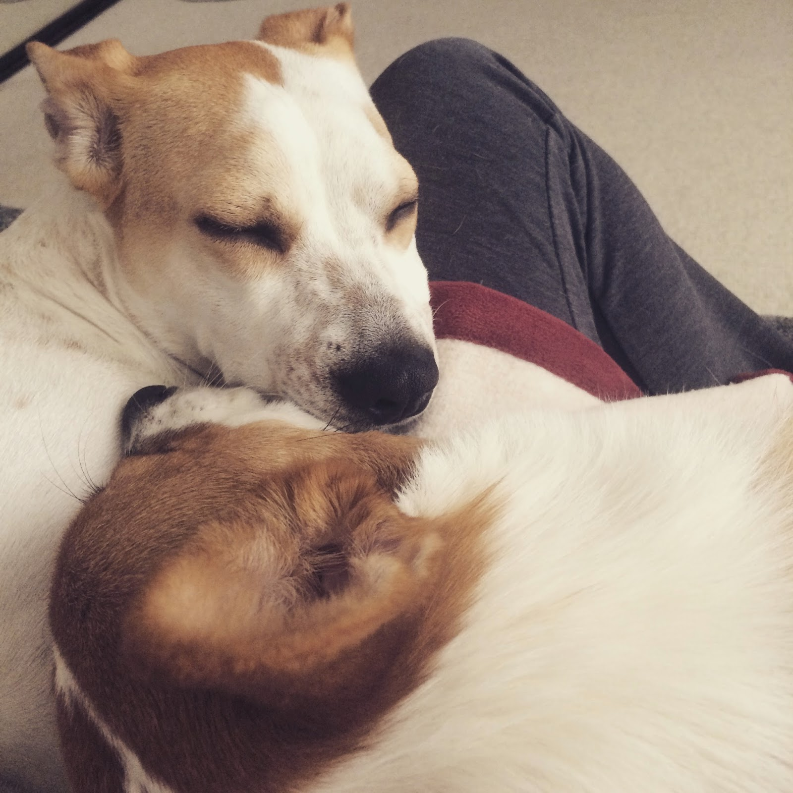 a picture of dogs sleeping together