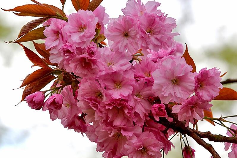Fotos - Blüten - Blütenfotos - Pflanzen - Baumblüte