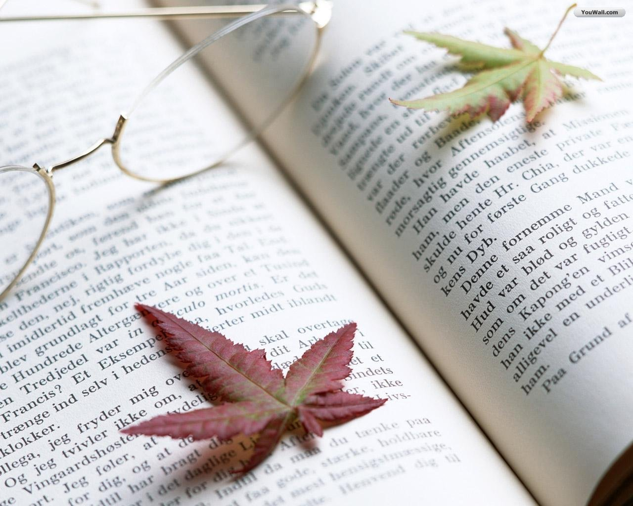 http://1.bp.blogspot.com/-q9kfY-TEfqs/Tq1Pc6A9joI/AAAAAAAABCY/cXRhQ2Drpnk/s1600/leaves_over_the_book_wallpaper_e73ad.jpg