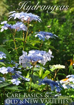 Feature Garden Post: