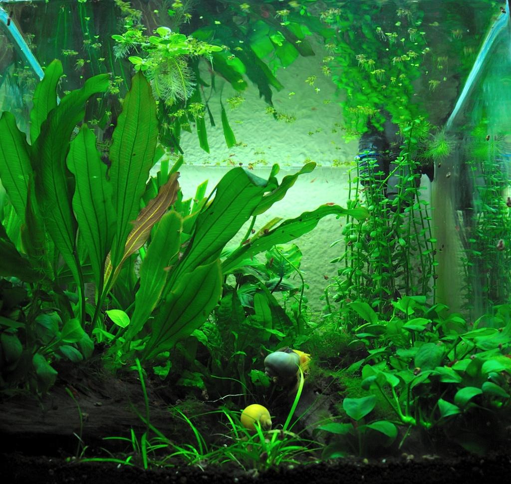 Las aventuras de un pez de tierra como marcha mi acuario for Acuario 90 litros