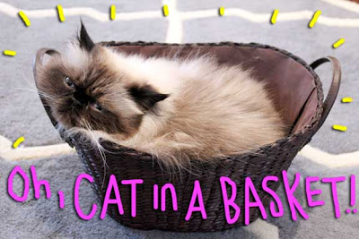 cat-in-basket-01