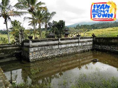 Bali Rice Terraces Indonesia Jatiluwih