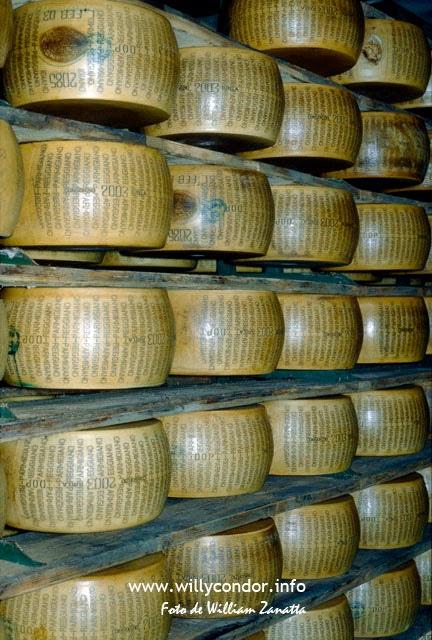 Parmigiano - Reggiano
