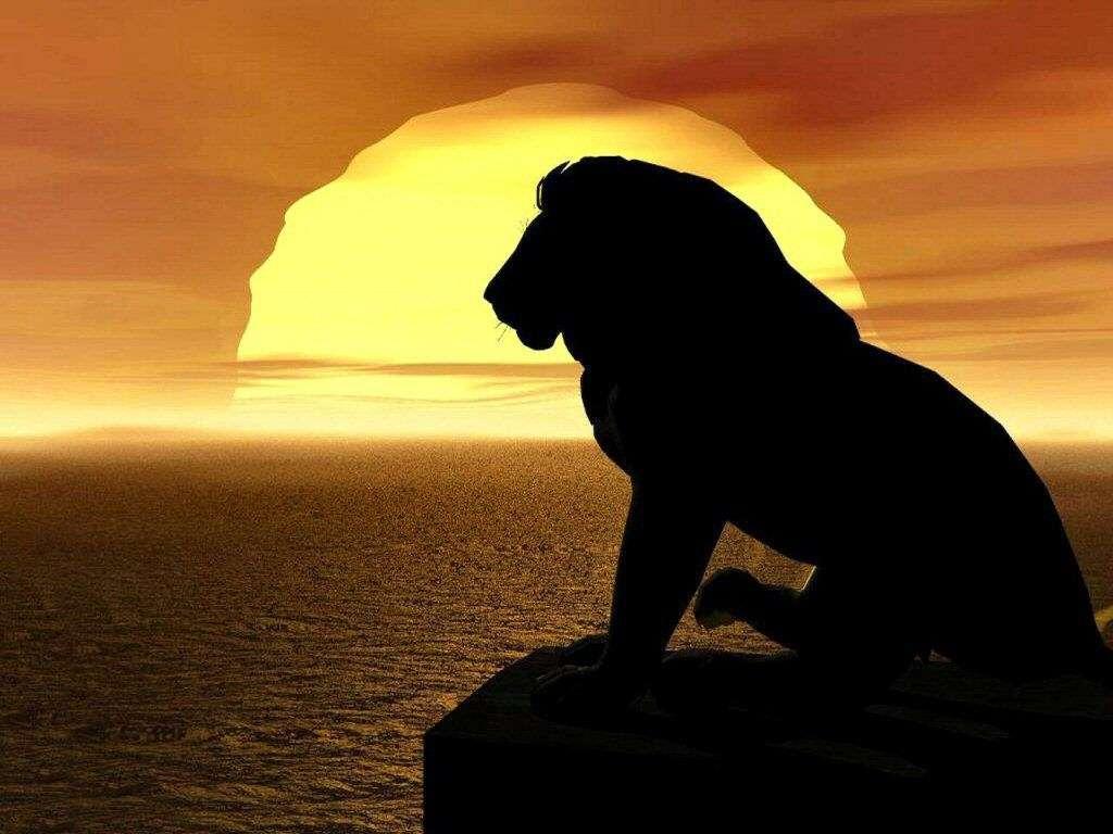 gambar hewan - gambar singa